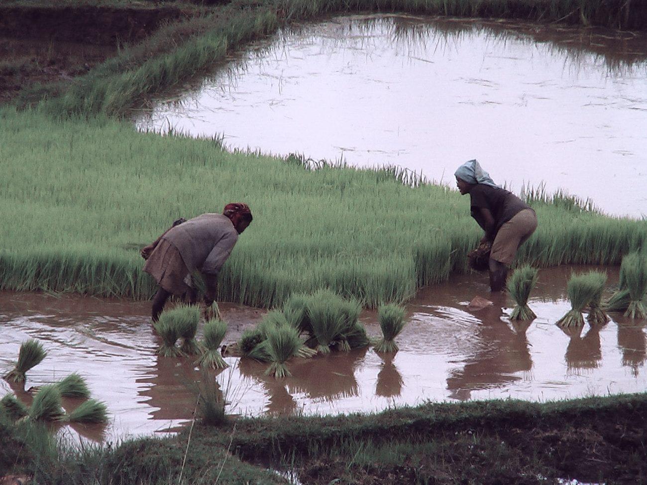 Activité avec les villageois