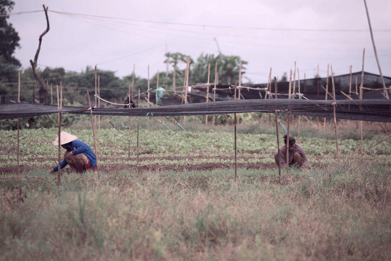 laos-Farmers