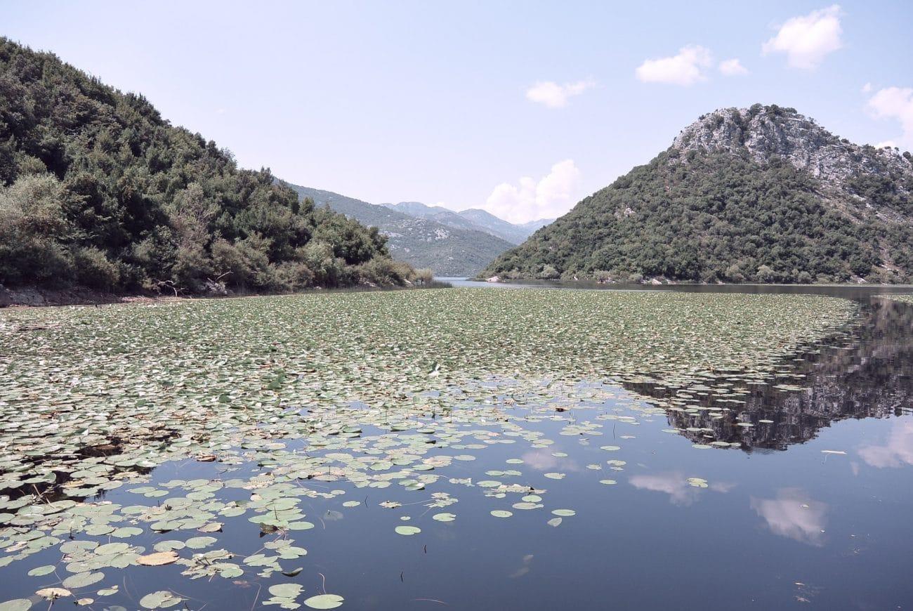 skadar-lake